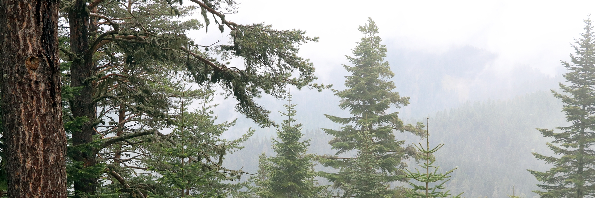 Manavgat Orman Yangını Raporu