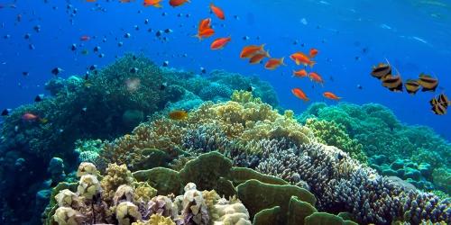 """Dünya Çevre Günü: """"Ekosistem Onarımı ve Yenilenmesi"""""""