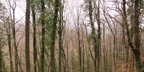 Hatay Orman Yangınları Hakkında