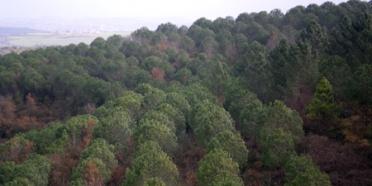 Çatalca Durusu'daki 7 Ağaç Ormanlarını Ziyaret Ettik