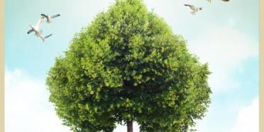 7 Ağaç Ormanlarından Sevgililer Günü Mesajı
