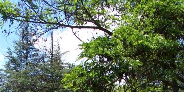 Uluslararası İklim Değişikliği ve Ormancılık Konferansı Sonuç Bildirgesi