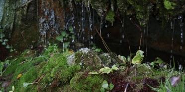 Ekolojik yaklaşımlar TKB gündeminde