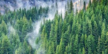 ÖNEMLİ DUYURU: ÇEKÜL 7 Ağaç Ormanları