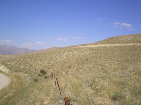 Sivas Divriği dikim sahası