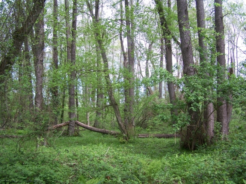 Su Basar Orman Kavramı ve İğneada Longozları