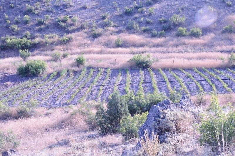 Türkiye'de Ekoköyler