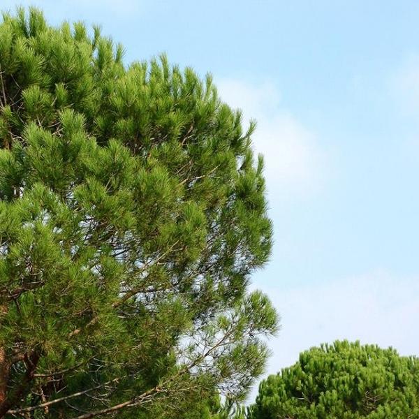 7 Ağaç Ormanları Dijital Haritada