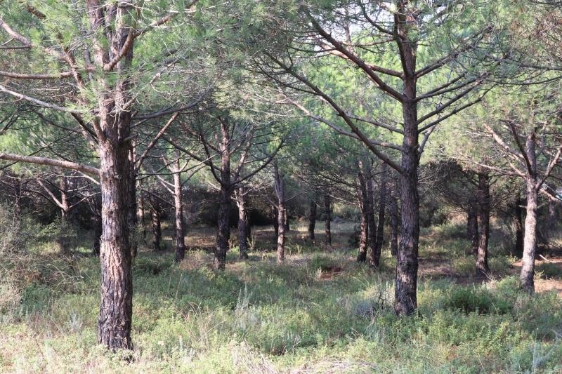 92 Ormanının Selamı Var!