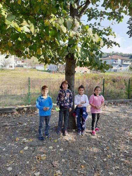 Duzce Perihan Tulan Ilkokulu Ağaç Rallisi etkinliği
