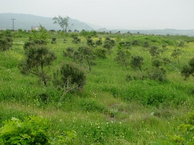 Eski maden sahası yeşilleniyor