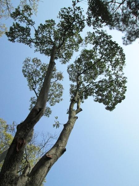 Ağaçlar İstanbul'u anlatıyor