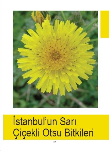 İstanbul'un Doğal Bitkileri